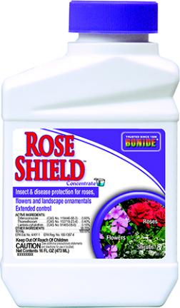 987 PT ROSE SHIELD CONC
